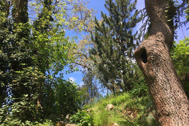 Arboretum  | foto: Jana Strejčková,  Český rozhlas